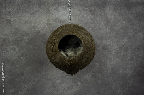 Photo Hanging coconut nest with brown woolly fluff and a vintage style background