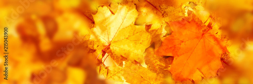 Foto auf Leinwand Rotglühen Colorful maple leaves pattern. Red and yellow maple leaves close up Autumn landscape. Selective focus. Panoramic image