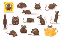 Cute Brown Rat Various Poses C...