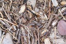 Flotsam At The Beach. Let´s Clean Up The Beach