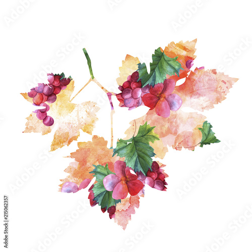 Wine making vine watercolor drawing in the shape of a leaf, isolated on white, with clipping path Fototapete