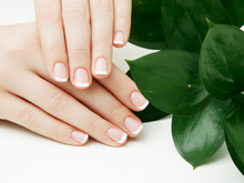 Skincare. Beautiful Delicate Hands With Manicure And Green Leaves, Closeup Isolated On White. Photo Of A Female Beauty Hand At Spa Salon On Manicure. Professional French Manicure.
