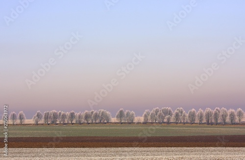 Fotobehang Landschap Wintry landscape, frost-covered trees and field, Thuringia, Germany, Europe