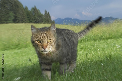 Cat in the gras