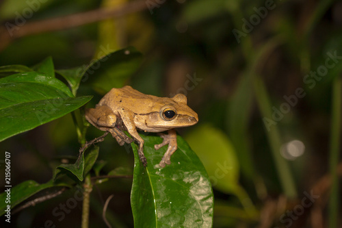 Tuinposter Kikker Image of yellow frog with nature in Thailand