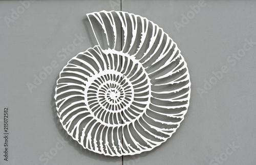 Valokuva  An amazing fibonacci pattern in a nautilus shell