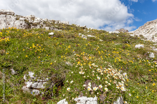 Meadow with expanse of colored flowers, Dolomites, Italy Poster
