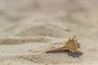Seashells on the beach in the sand