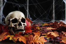 Halloween Human Skull Lying In Autumn Leaves In Front Of An Old Window With Dark Background And Spider Webs.