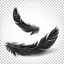 Vector. Black Feathers On Whit...