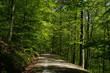 canvas print picture - Fruehlingswald; Waldweg im Fruehling;