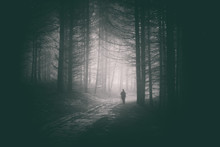 Peson Walking In Path Of Dark And Mysterious Forest