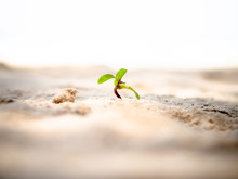 Tiny Sprout Grows On Sand Beach.