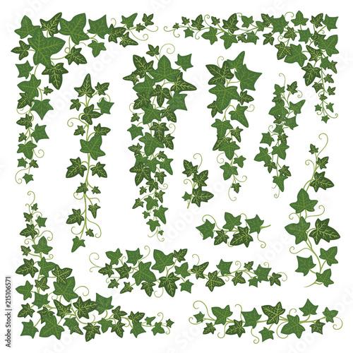 Valokuva Ivy branches green set