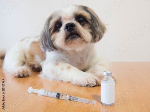 Nice dog preparing for vaccine injection with medical vial and syringe on wood table at veterinary clinic Wallpaper Mural