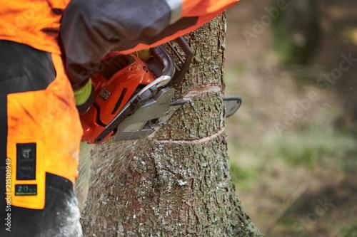 Baum Fällen Englisch