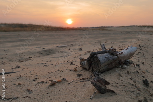 Fototapeta Zachód słońca na Pustyni Błędowskiej, Polska, pusto, nikogo, ogniste kolory nieba, spróchniały pień drzewa leży na piasku obraz