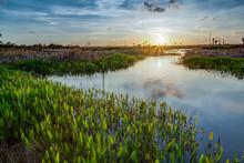 Lush Viera Wetlands At Sunset.tif