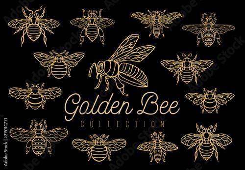 Fotografija Honey bee bumblebees wasps set sketch style collection insert wings emblem symbo