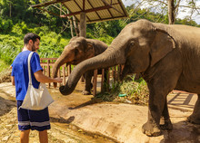 Young Man Feeds Elephants With...