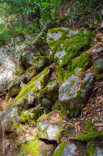 Fotografie, Obraz  Moss on rocks