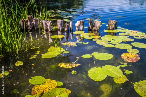 Photo Stands Water lilies Lake with some nenufar leaves on a summer day
