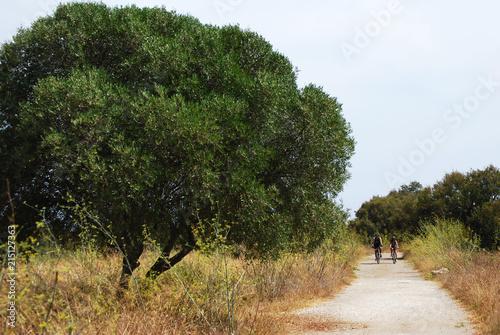 Fotografía  Sendero, carril, campo en verano.