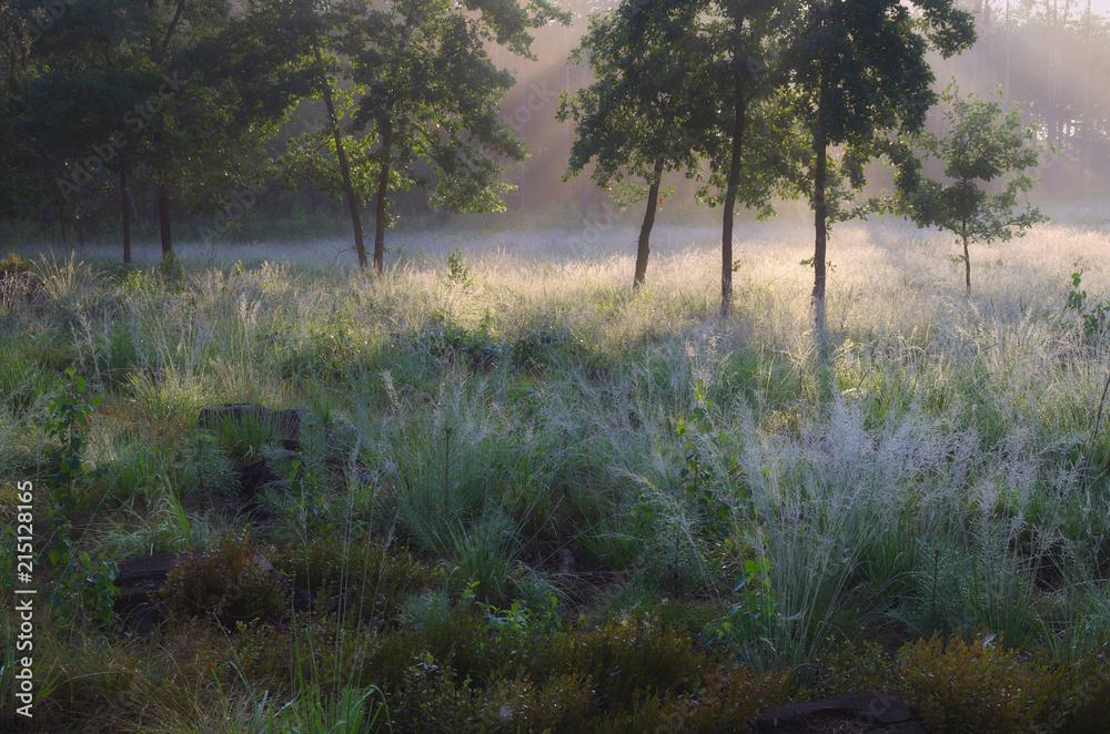 Fototapeta Srebrne trawy