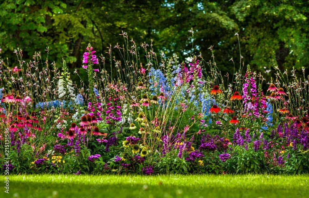 Fototapeta kolorowy ogród kwiatowy