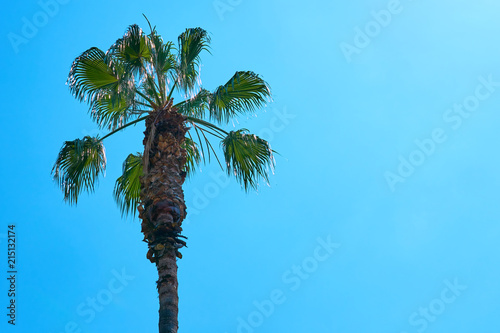 Spoed Foto op Canvas Palm boom Palm tree against blue sky. Copy space for text.