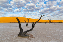 Dead Acacia Trees, Deadvlei, Namib-Naukluft National Park, Namibia