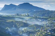 Rural Landscape, Nuwara Eliya,...