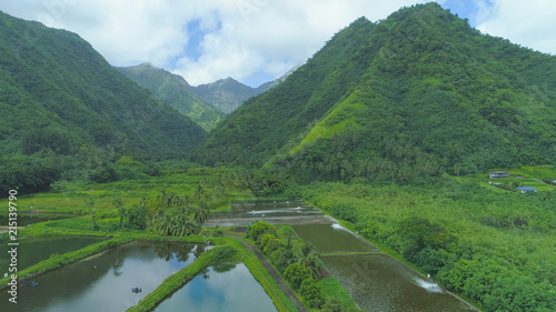 Photo AERIAL Mountains covered by rainforest tower over the square ponds of prawn farm