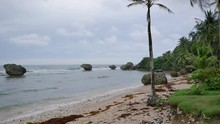 Bathsheba On The East Coast Of...