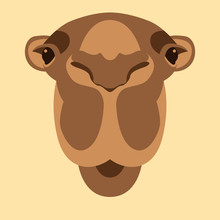 Camel  Head Face Vector Illustration Flat Style Front