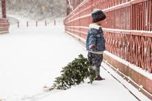 Boy Holding Small Christmas Tr...
