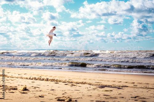 Fototapeta samotna mewa walczy z Bałtyckim wiatrem obraz