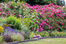 Densely Flowering Garden