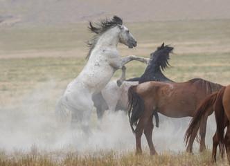 Great Basin Wild Horses.
