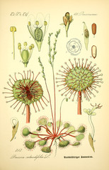 Panel Szklany Botaniczne Illustration of plant