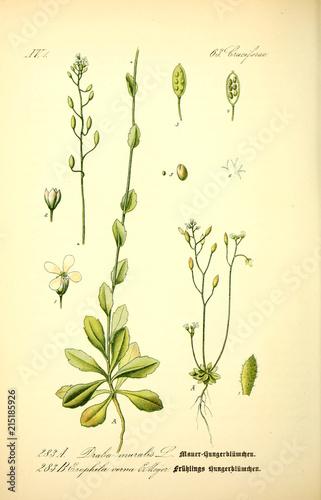 Fototapeta Illustration of plant obraz na płótnie