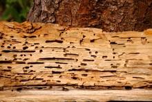Löcher Vom Holzwurm