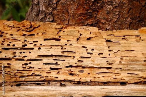 Locher Vom Holzwurm Kaufen Sie Dieses Foto Und Finden Sie Ahnliche