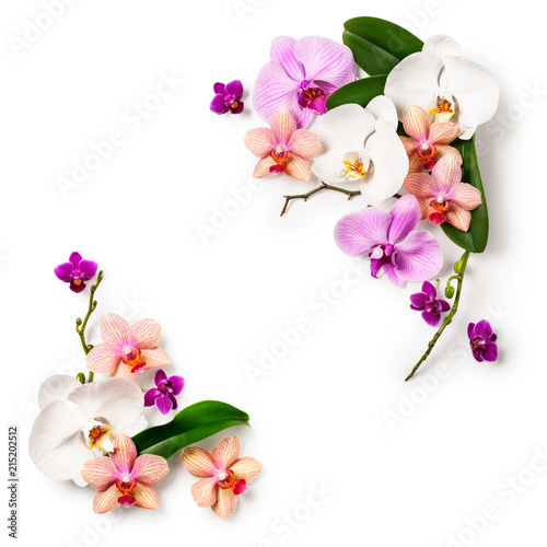 Frame with orchid flowers.