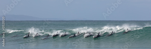 Foto op Aluminium Dolfijn Surfing dolphins at Supertubes in Jeffreys Bay