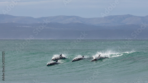 Foto op Aluminium Dolfijn Four surfing dolphins at Supertubes in Jeffreys Bay