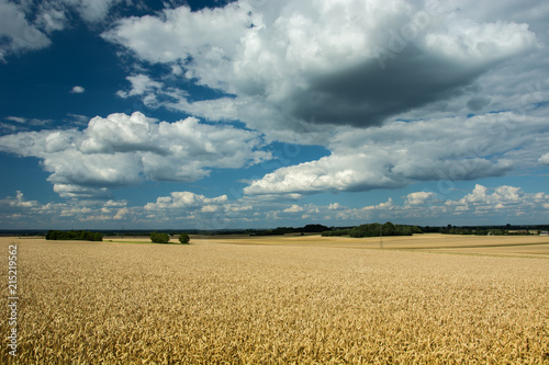 Fotobehang Platteland Wheat field, horizon and clouds in the sky