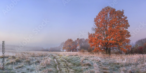 Autumn nature landscape with clear sky and colored tree. Cold meadow with hoarfrost on grass in november morning. Amazing fall. Vibrant panoramic view on natural wild autumnal meadow before forest.