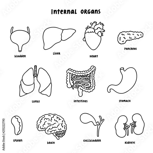 Internal Organs Outline Set