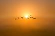 Flight of Geese at Sunrise